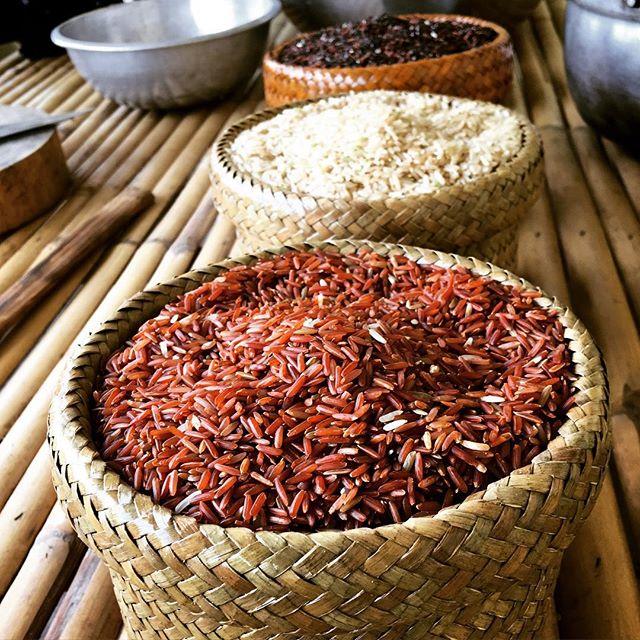 Rice trotters-variétés de riz